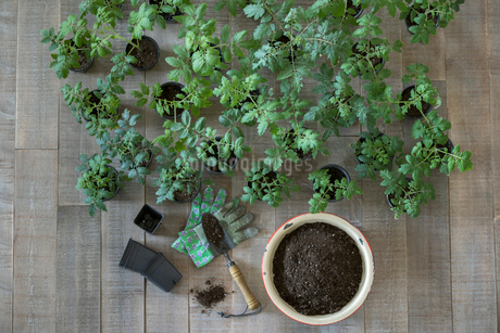 Knolling of seedlings and soil in flowerpotの写真素材 [FYI02318678]