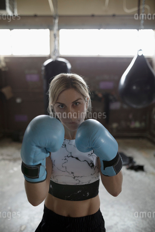 Portrait tough woman boxer wearing boxing gloves in fighting stance at gymの写真素材 [FYI02318684]