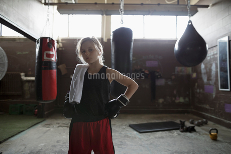 Portrait tough girl boxer wearing boxing gloves near punching bags in gymの写真素材 [FYI02318891]