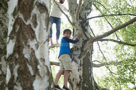 Portrait boy climbing treeの写真素材 [FYI02320721]