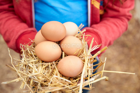 Close up girl holding fresh, organic brown eggsの写真素材 [FYI02322274]