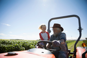 Grandfather farmer and granddaughter driving tractor on sunny farmの写真素材 [FYI02322402]