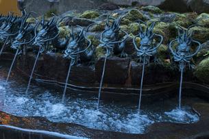 箱根神社 龍神水の写真素材 [FYI02322531]