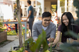 Smiling couple gardening in backyardの写真素材 [FYI02324269]