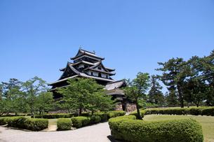松江城 新緑の天守閣の写真素材 [FYI02324354]