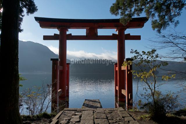 箱根神社 平和の鳥居の写真素材 [FYI02324358]