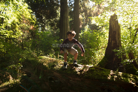 Boy playing on fallen log in sunny woodsの写真素材 [FYI02324697]