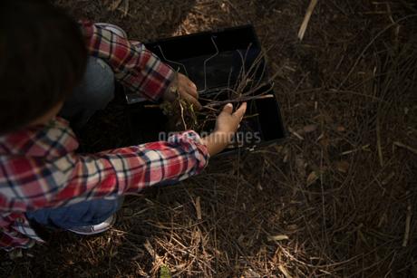 Overhead view boy gathering sticks in woodsの写真素材 [FYI02325053]