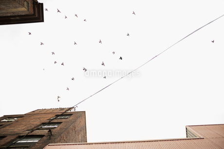 View from below birds flying over urban buildingsの写真素材 [FYI02325096]