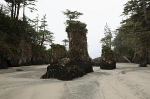 Rocks and trees on sandy wilderness beachの写真素材 [FYI02326435]