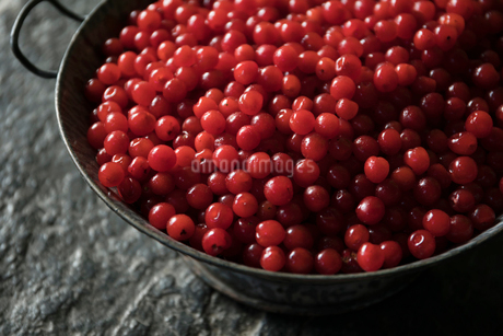 Close up still life vibrant red currants in colanderの写真素材 [FYI02326509]