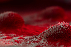 Microscopic red virus spore growthの写真素材 [FYI02327219]