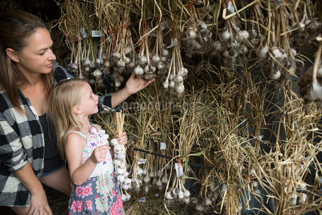 Mother and daughter hanging, drying garlic in barnの写真素材 [FYI02327282]