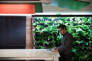 Businessman working at laptop next to indoor wall garden in officeの写真素材 [FYI02327752]
