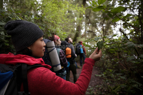 Curious woman backpacking with friends in woods, touching leafの写真素材 [FYI02328973]