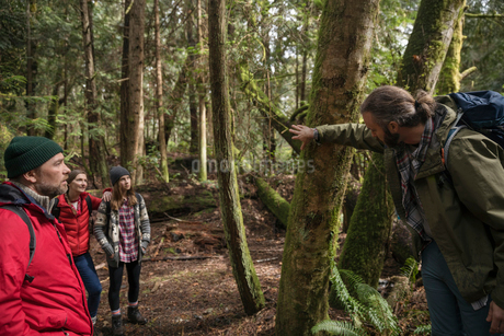 Trail guide leading family hiking in woodsの写真素材 [FYI02329094]