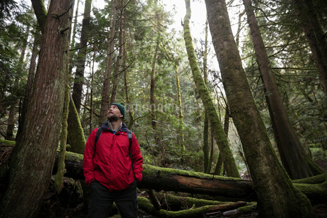 Thoughtful male hiker looking up at trees in woodsの写真素材 [FYI02329743]