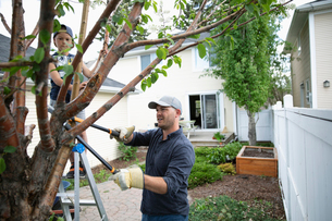 Father and son doing yard work, pruning tree in back yardの写真素材 [FYI02330506]