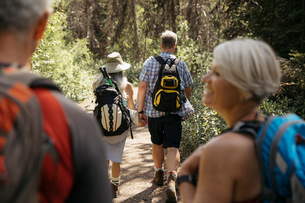 Mature couples backpacking, hiking in forestの写真素材 [FYI02331310]