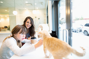 Mother and daughter drinking coffee and playing with cats in cat cafeの写真素材 [FYI02332561]