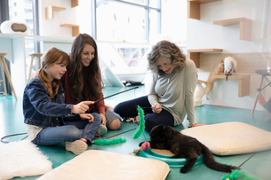 Multi-generation women playing with kitten in cat cafeの写真素材 [FYI02332657]