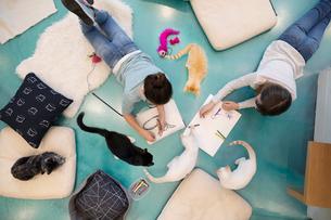Girls drawing on floor in cat cafeの写真素材 [FYI02332707]