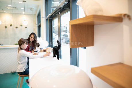 Mother and daughter drinking coffee and playing with cats in cat cafeの写真素材 [FYI02332821]