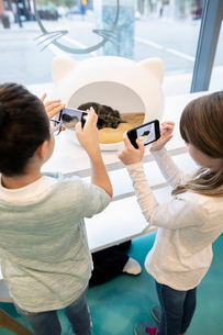 Girls with camera phones photographing sleeping cat in cat cafeの写真素材 [FYI02332966]