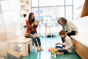 Multi-generation women playing with kitten in cat cafeの写真素材 [FYI02333237]