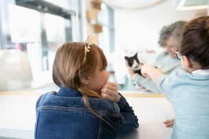 Girl wearing tiara, watching cat in cat cafeの写真素材 [FYI02333357]