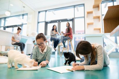 Girls coloring on floor in cat cafeの写真素材 [FYI02333371]
