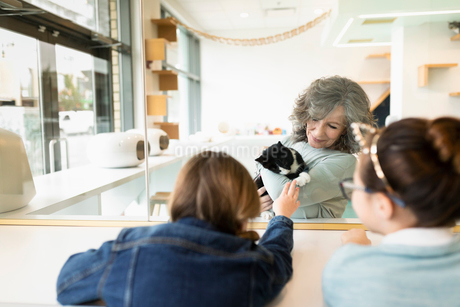 Woman showing cat to girls in cat cafeの写真素材 [FYI02333675]
