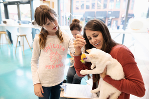 Mother and daughter playing with kitten in cat cafeの写真素材 [FYI02333757]