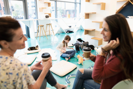 Women friends drinking coffee and talking while girl plays with kittens in cat cafeの写真素材 [FYI02333768]