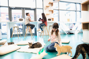 Girl playing with cats in cat cafeの写真素材 [FYI02333783]