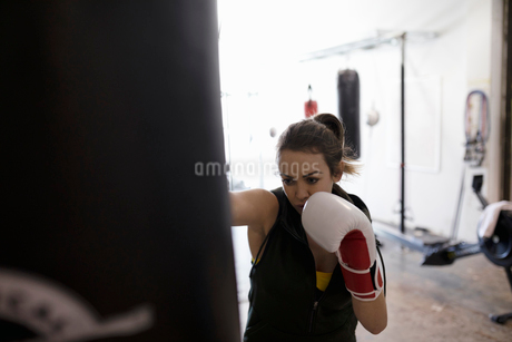 Tough female boxer training at punching bag in gymの写真素材 [FYI02333931]