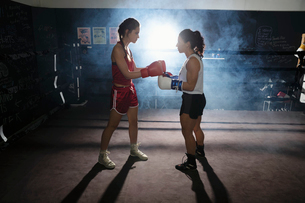 Female boxers training, touching gloves in boxing ringの写真素材 [FYI02333970]