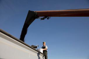 Male farmer watching chute fill trailerの写真素材 [FYI02333988]
