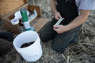 Male farmer testing soilの写真素材 [FYI02334006]