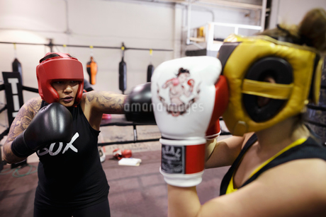 Female boxers training in gymの写真素材 [FYI02334024]