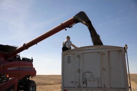Farmer watching combine harvester filling trailer on sunny farmの写真素材 [FYI02334261]