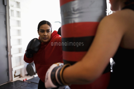 Focused, tough female boxer training at punching bag in gymの写真素材 [FYI02334416]