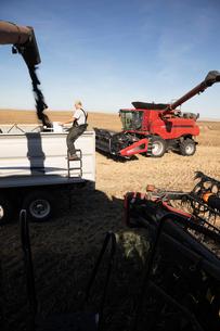 Male farmer watching combine harvester filling trailer on sunny farmの写真素材 [FYI02334437]