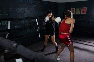 Tough female boxers training in boxing ringの写真素材 [FYI02334537]