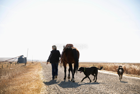 Woman with dogs walking horse on sunny rural gravel roadの写真素材 [FYI02335333]