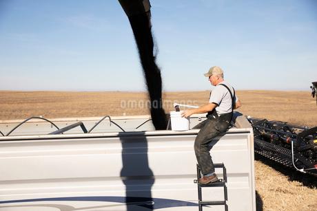 Male farmer watching chute filling tractor trailer on sunny farmの写真素材 [FYI02335670]
