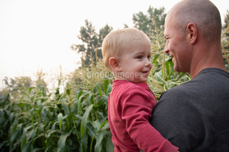 Father holding toddler son in rural corn fieldの写真素材 [FYI02335865]