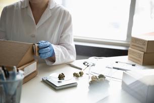 Quality control specialist weighing marijuana budsの写真素材 [FYI02337799]