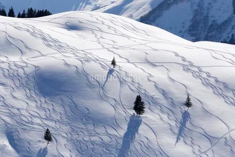 Ski tracks in deep snow, Unterdamulser Alpe, mountainの写真素材 [FYI02337925]