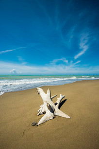 Driftwood, natural beach in Albarese, Natural Park ofの写真素材 [FYI02337994]